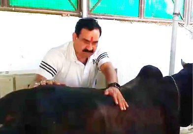 कोराना वायरस-नरोत्तम गायों की सेवा तो कैलाश विजयवर्गीय शिमला मिर्च की सब्जी बना रहे हैं